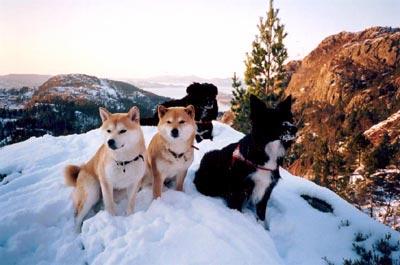 mistet hund i fjellet